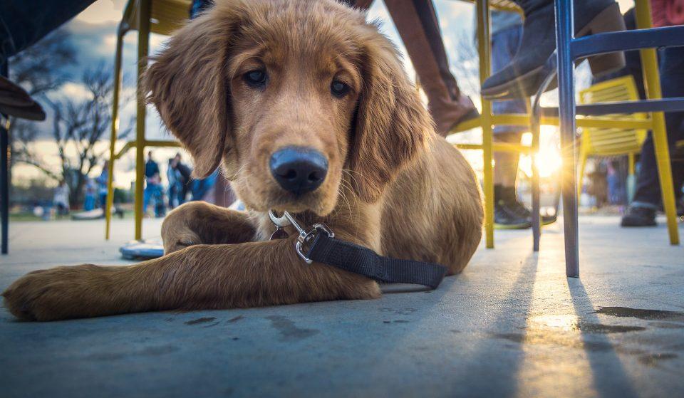 12 Wonderful Dog-Friendly Cafés And Bars Around Melbourne