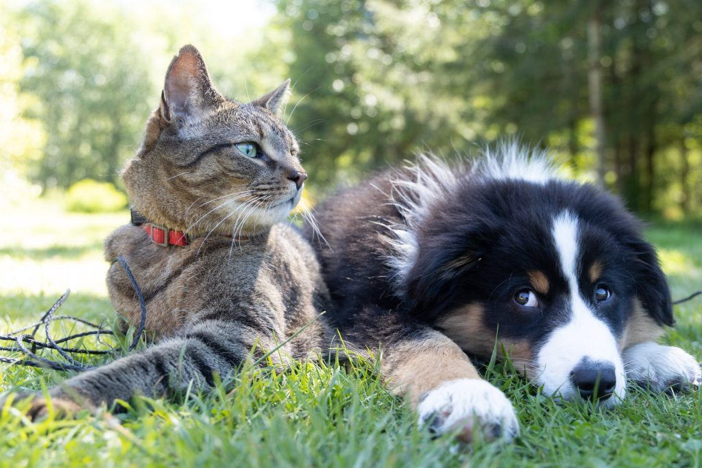 6 Interesting Ways To Treat Your Pets During Melbourne's Lockdown