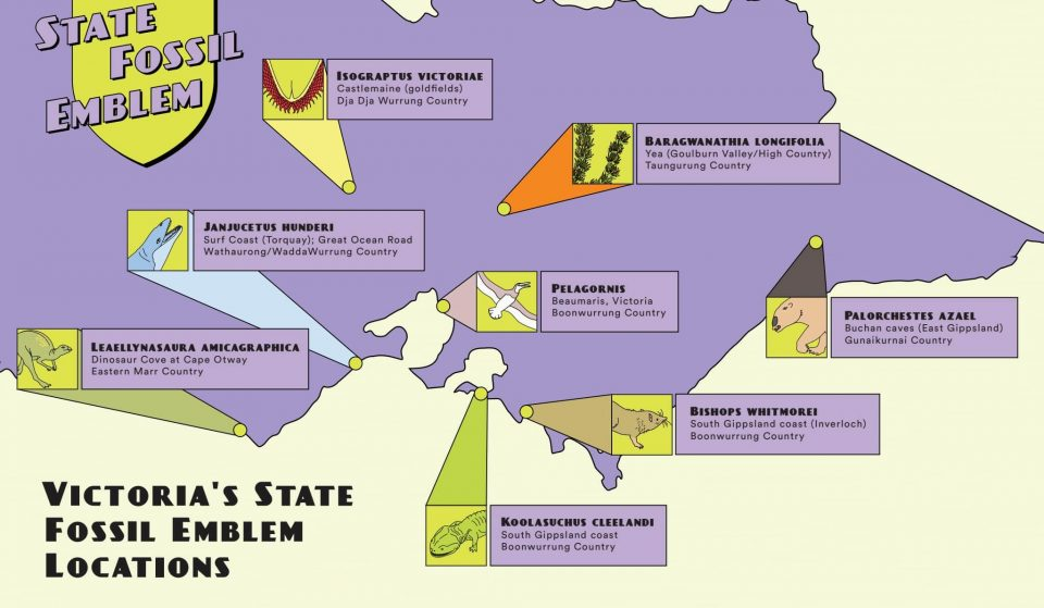 The Future Of Victoria's State Fossil Emblem Lies In Your Hands