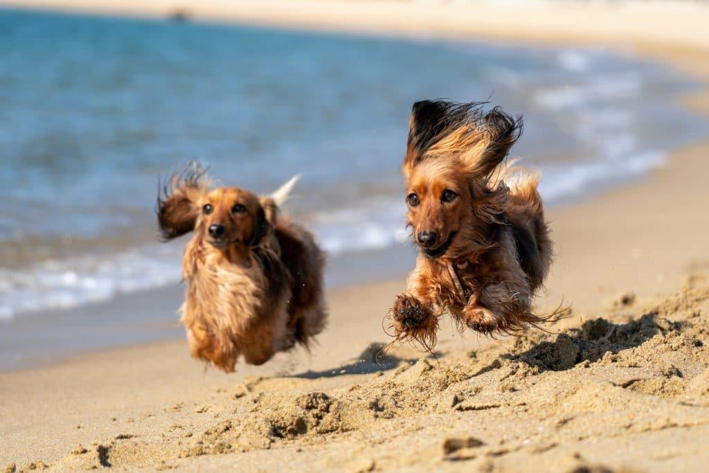 6 Delightful Dog Beaches Around Melbourne That You Can Splash Around In