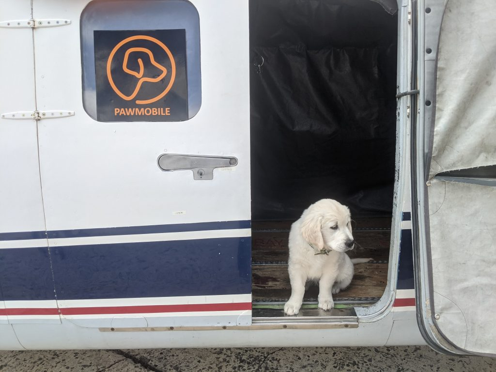 A dog sitting in the cabin of a Pawmobile plane