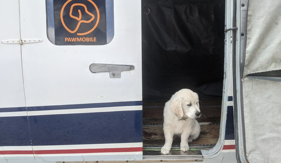 The Sky's The Limit For Travelling Pets With Pawmobile Flight Service