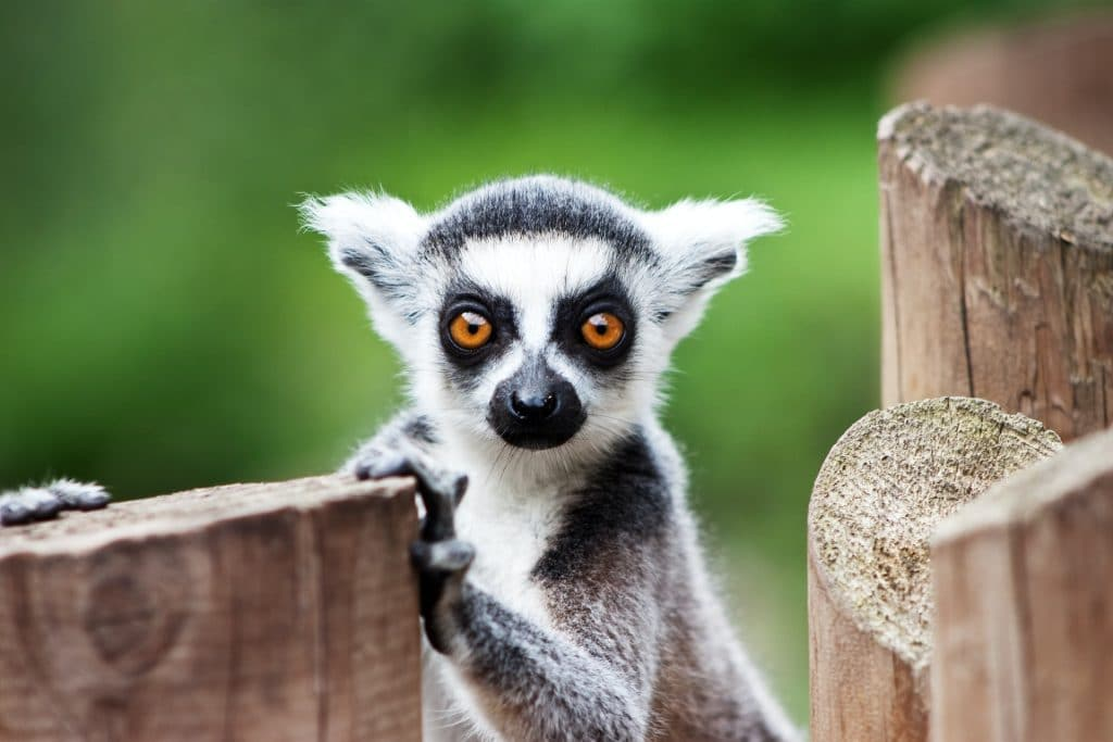 Zoos Victoria Will Reopen To Visitors From Tuesday October 26