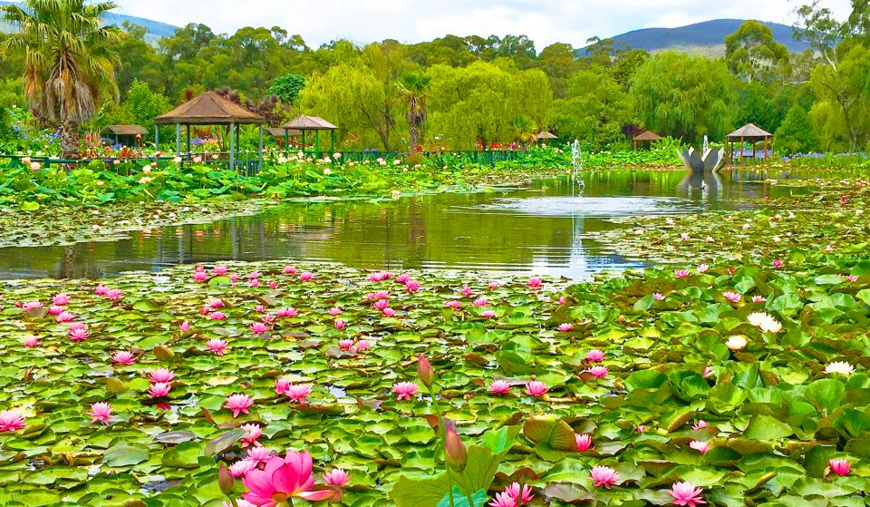 Immerse Yourself In The Beauty Of A Monet Painting At Blue Lotus Water Garden