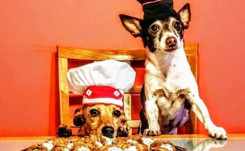 There's A Café In Miami Where You Can Take Your Dog On A Date This Valentine's Day
