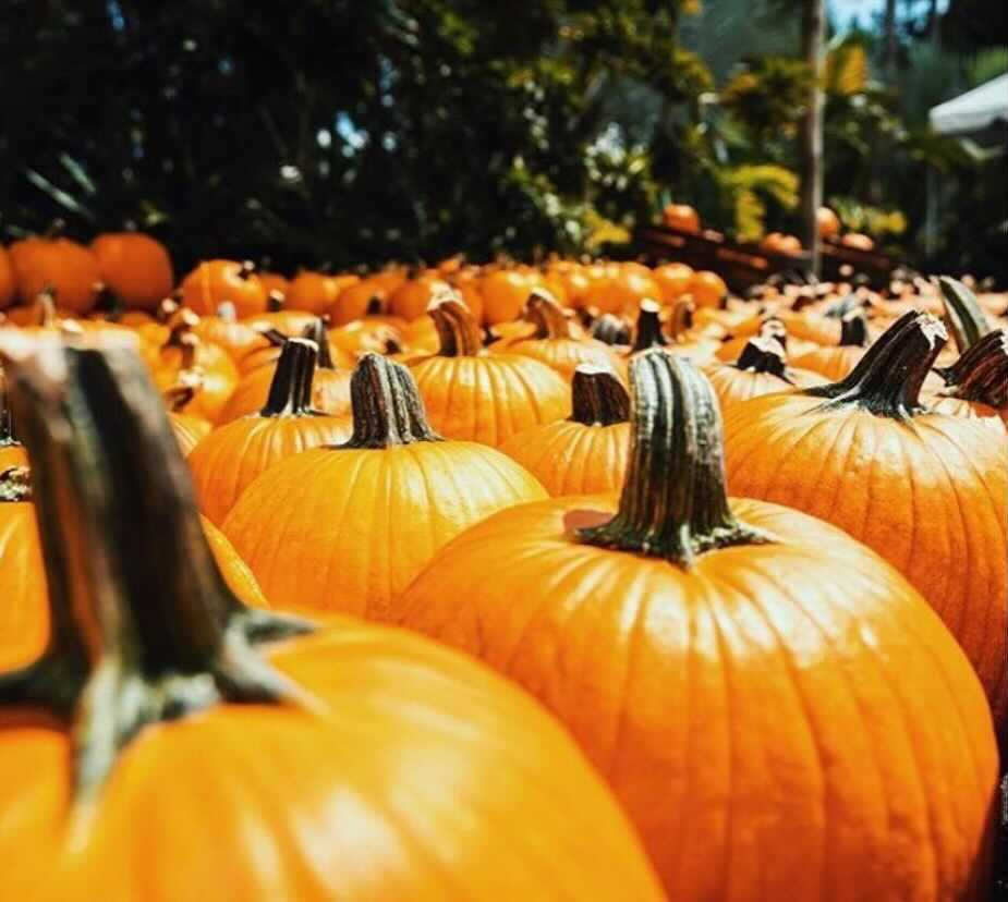 Gather The Fruits Of Fall At This Awesome Pumpkin Patch Near The Redlands