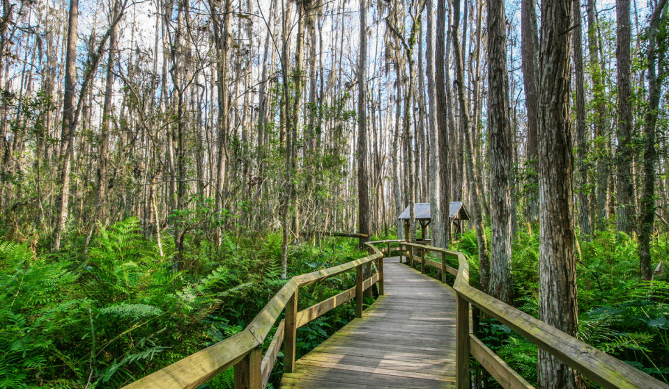7 Of The Best Places To Go Hiking Around Miami