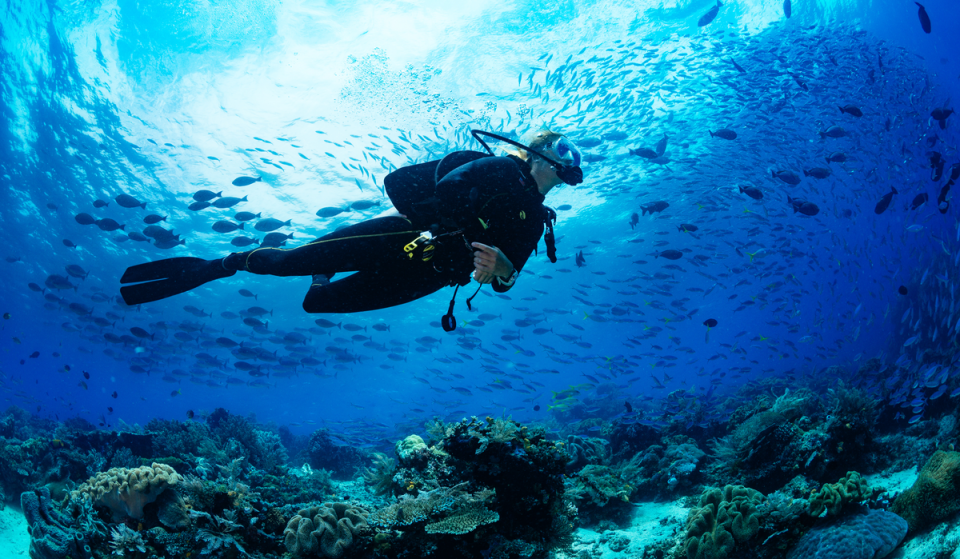 8 Best Places To Go Snorkeling & Scuba Diving Around Miami