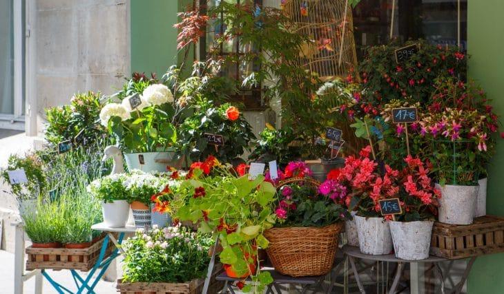 4 Blumenläden in München zum Besuchen nach dem Lockdown