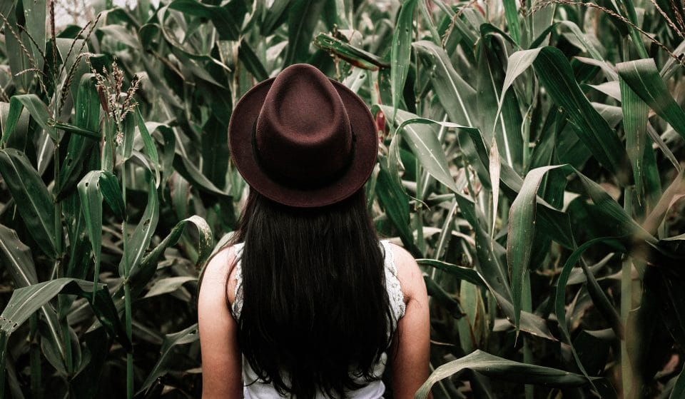 Get Lost In The Fall Spirit In This Year's Newly Designed Cajun Country Corn Maze