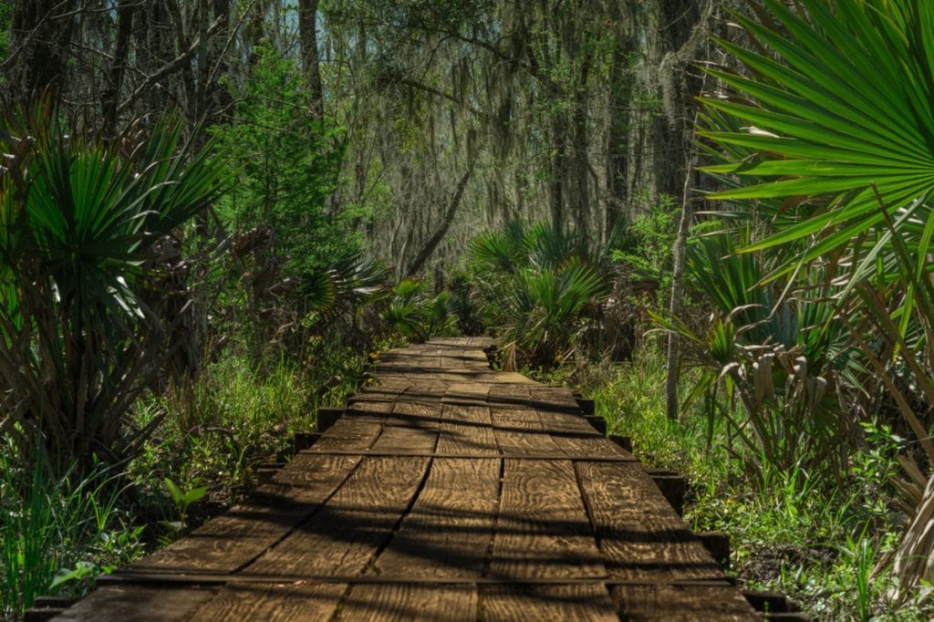 Top 9 Hiking Trails In And Around New Orleans That Are Definitely Worth The Trek