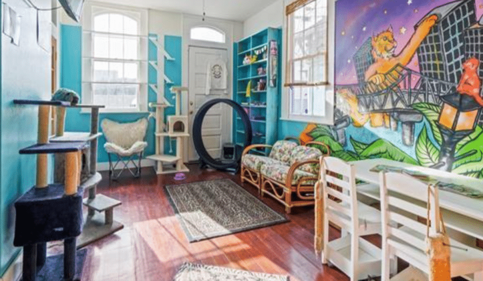 Quirky Cat Rescue Cafe For Sale In NOLA With Discount If Feline Friends Can Stay