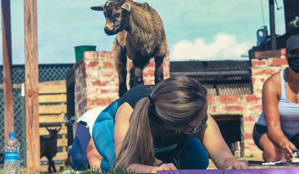 Experience Baby Goat Yoga At The Enchanting Paradigm Gardens In NOLA