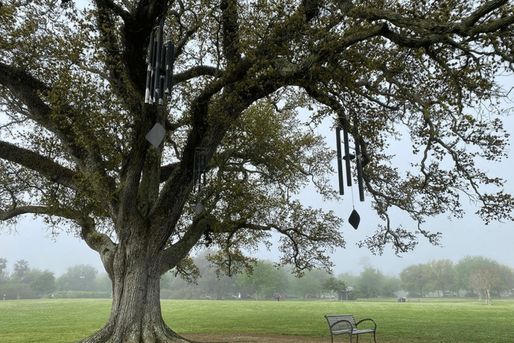 """Everything You Need To Know About """"The Singing Oak"""" In City Park"""