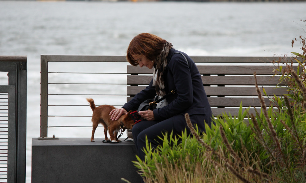 19 Struggles Of Being A Dog-Lover In New York City