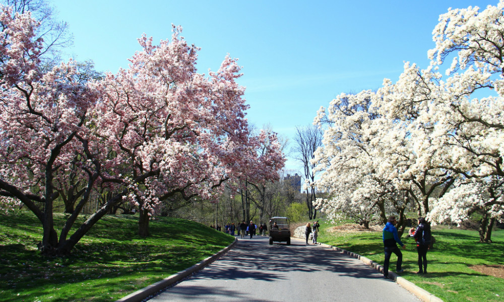 The 5 Best Tourist-Free Places To See NYC In Full Bloom