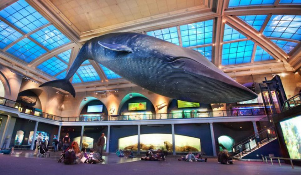 You Can Have A Sleepover At The Museum of Natural History For Valentine's Day