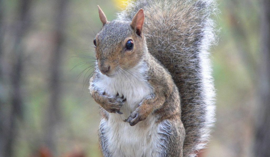 There's a Rabid Squirrel Running Wild in Prospect Park
