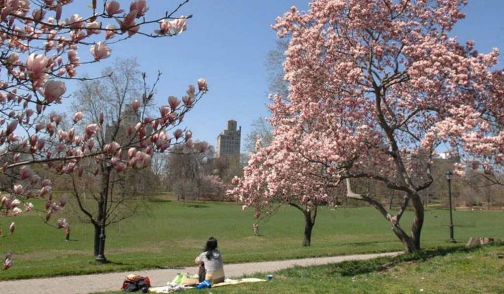 Prospect park Banning Cars this Summer