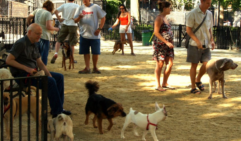 NYC Is Giving Out Free Water Bowls For Your Furry Friends