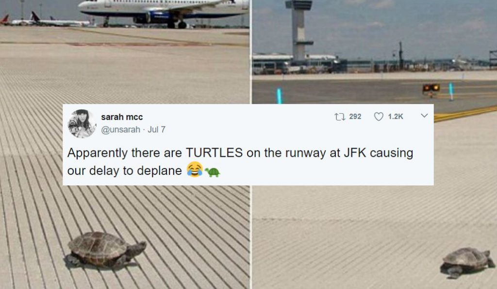 Here's why Turtle's Sex Lives are Delaying Flights at JFK