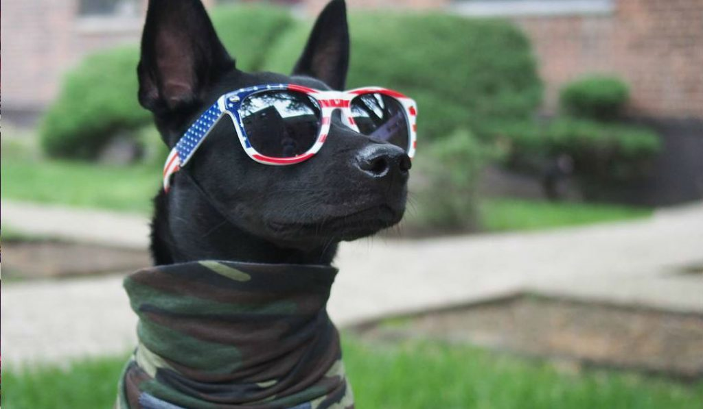 You'll never be as cool as Apollo, the NYC Terrier …Here's why