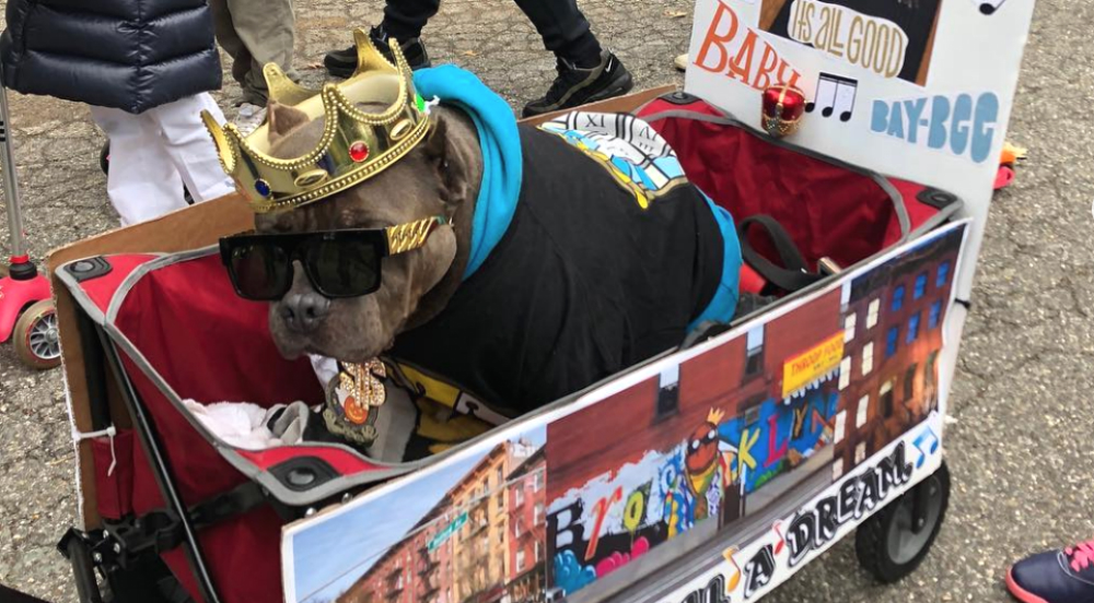 The Cutest Doggos at the 28th Annual Tompkins Square Halloween Dog Parade