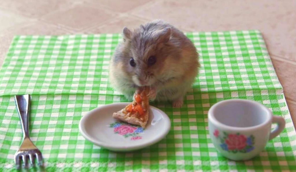 Mice In New York City Are Evolving To Better Digest Our Pizza
