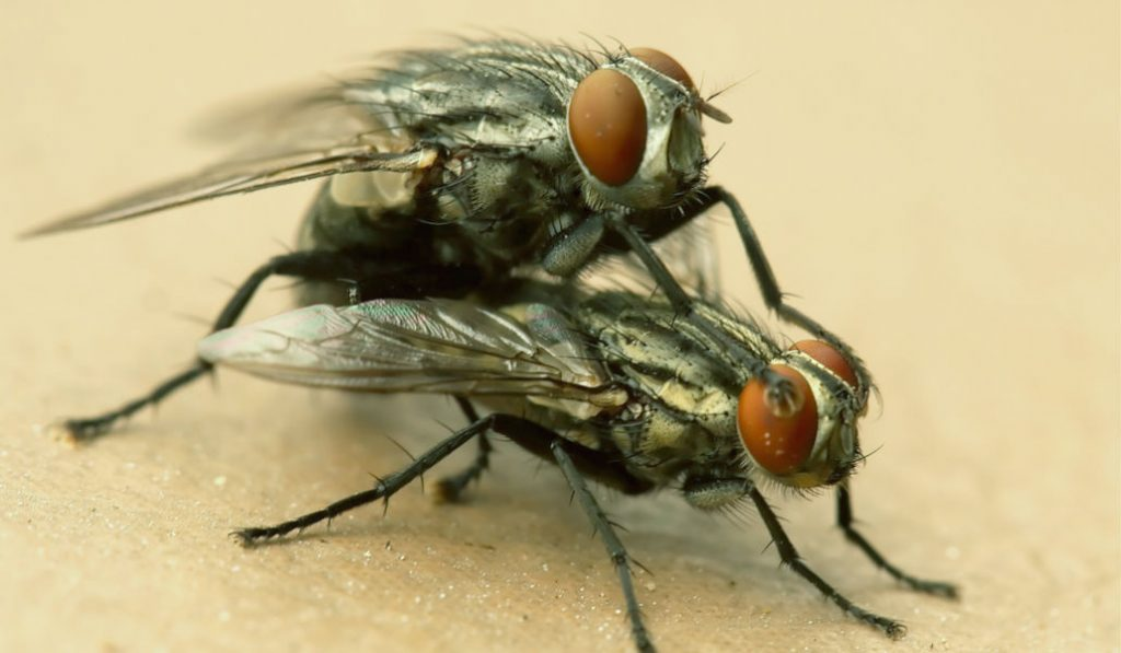 Scientists Discover a 'Kinky' New Fly Species in New York City