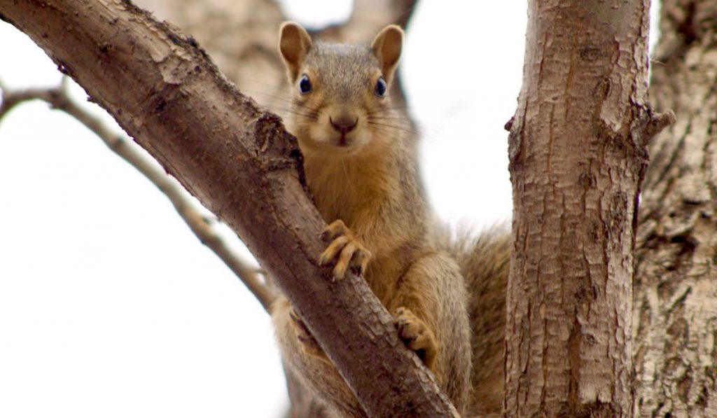 This New Jersey Squirrel Hates Christmas More Than You Do