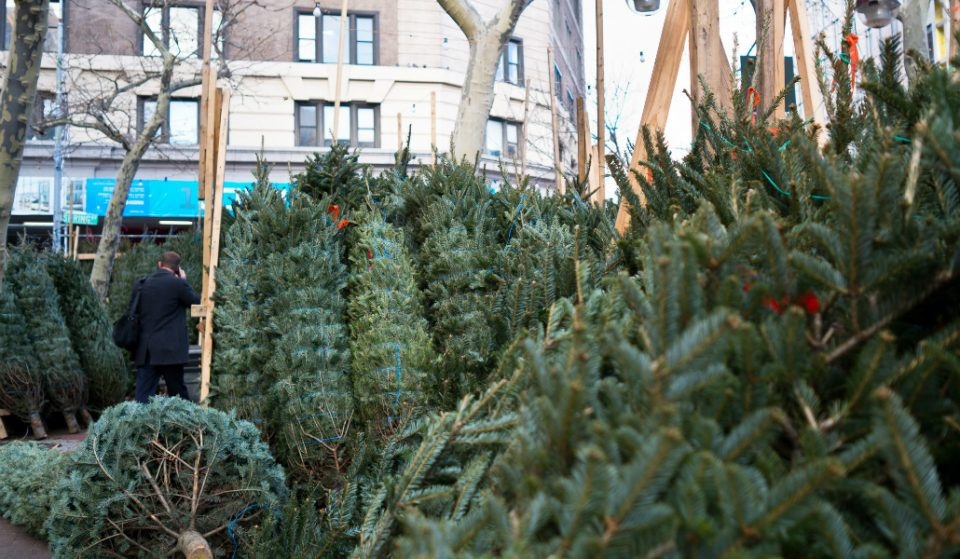 The Roller Coaster of Emotions Every New Yorker Experiences When Buying a Xmas Tree