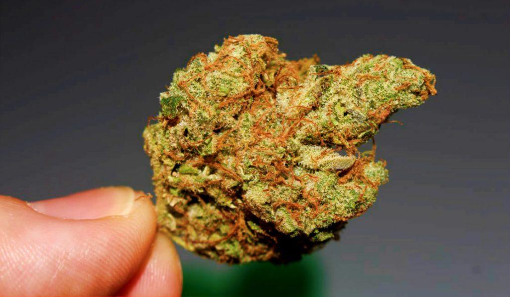 Legal Marijuana May Soon be a Reality in NYC