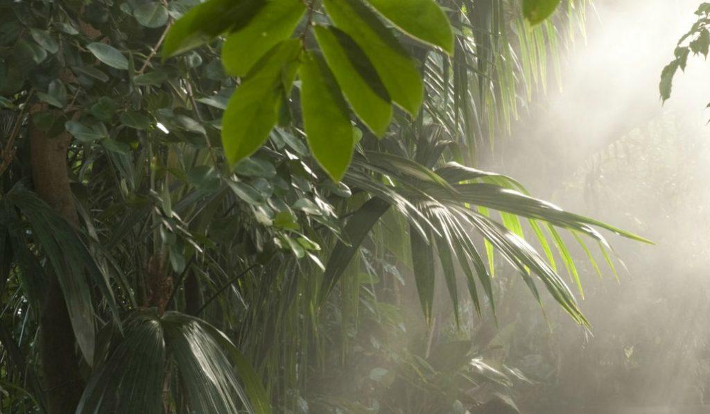 A Tropical Tease at the Botanical Gardens