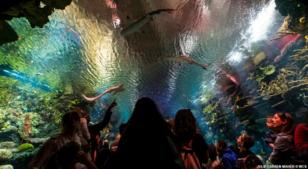 Enter A 40-Foot Shark Tunnel At New York Aquarium's 'Ocean Wonders' Exhibit