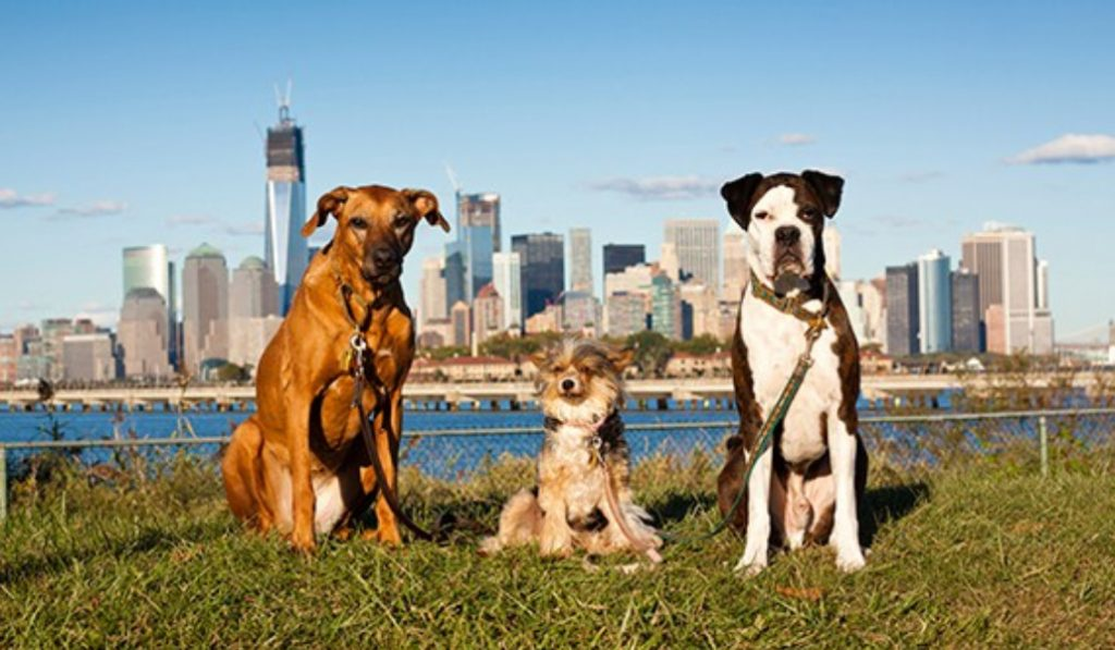 The 8 Most Adorable Dogs For Your NYC Apartment