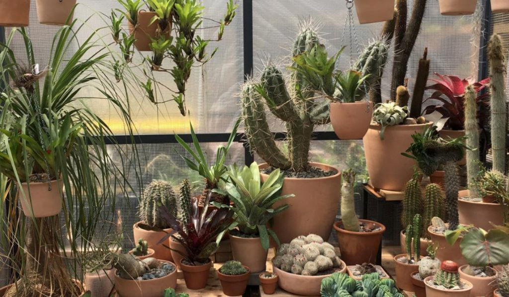 Popular L.A. Cactus Store Brings Desert Vibes to NYC With Pop-Up Garden