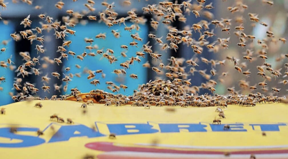 Watch 20,000 Bees Swarm a Hot Dog Stand in Times Square