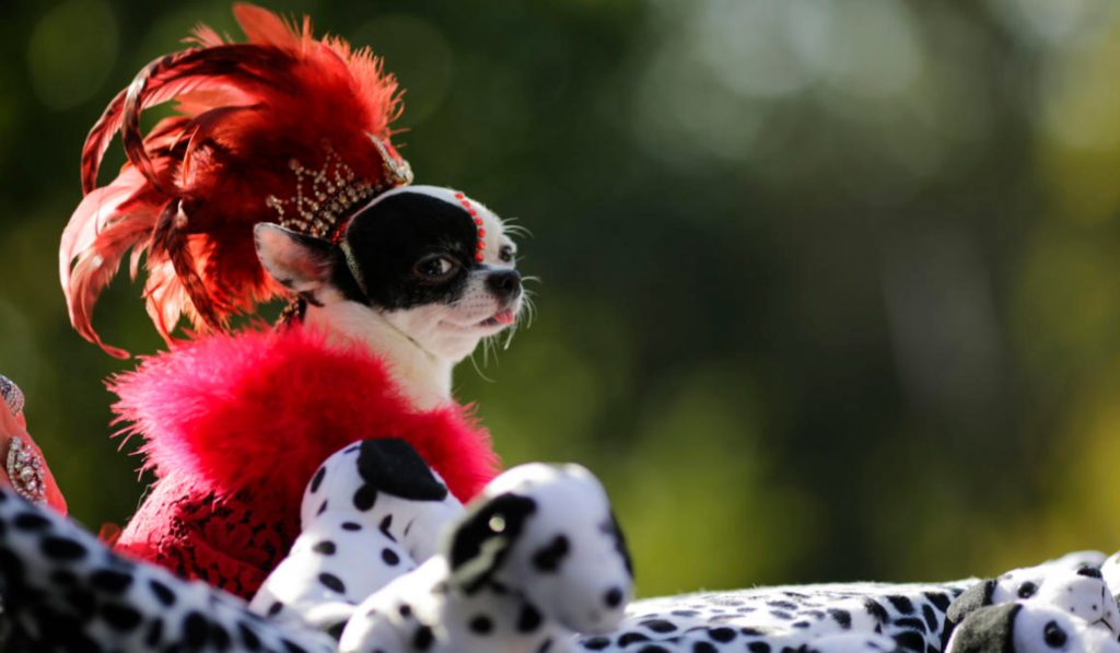 The Tompkins Square Park Halloween Dog Parade Is Officially Back On