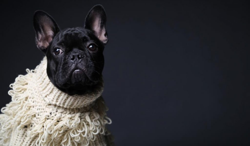 A One Day Doggy Pop-Up Is Happening In NYC This Weekend
