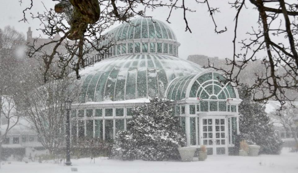 Brooklyn Botanic Garden Is Offering Pay-As-You-Wish Admission All Winter