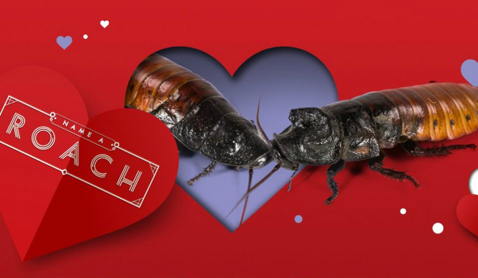 Name A Hissing Cockroach After Your Ex For Valentine's Day At The Bronx Zoo