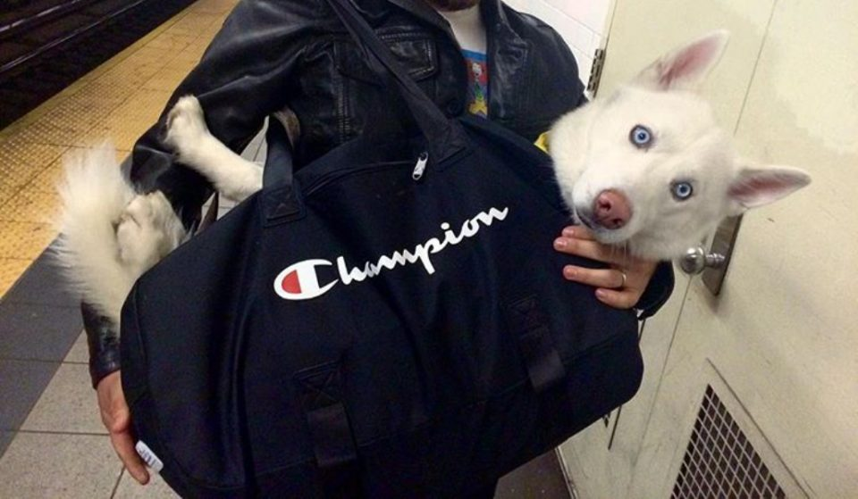 Dogs Are Required To Be In A Bag On The Subway, These Clever Commuters Get Around The Rule