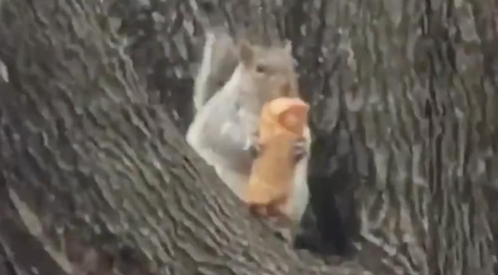 Watch This Adorable NYC Squirrel Chow Down On An Egg Roll