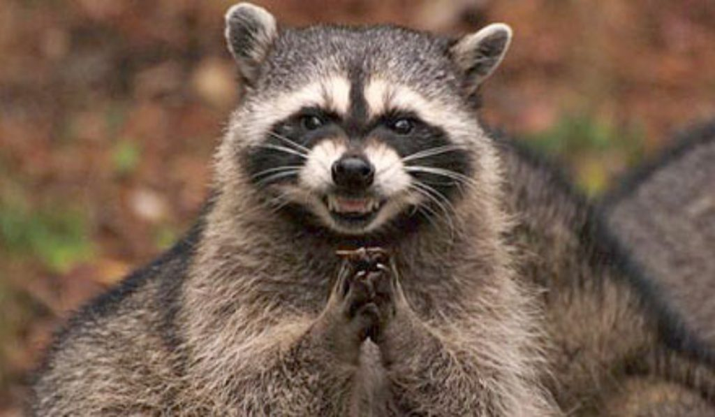 Is There a Raccoon Problem On The L Train?