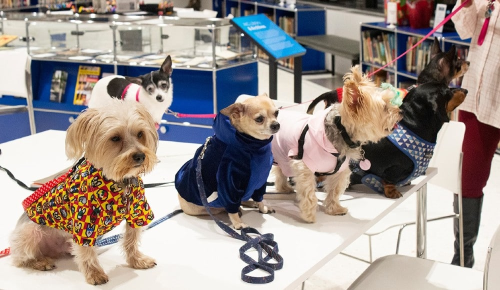 Explore All Of The Wonderful Paw-Sibilities At Museum Of The Dog In NYC