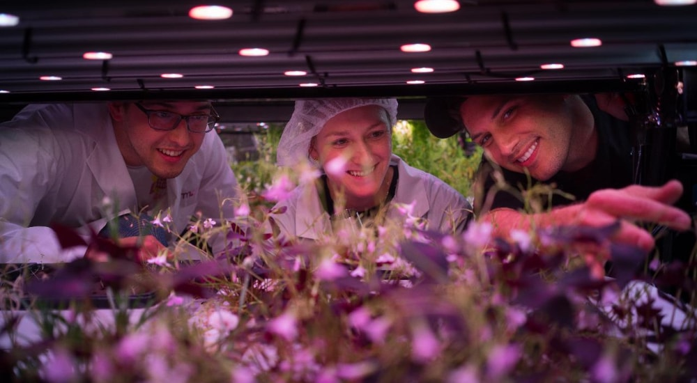 Tour Manhattan's Hydroponic Farm While Sippin' On Some Prosecco