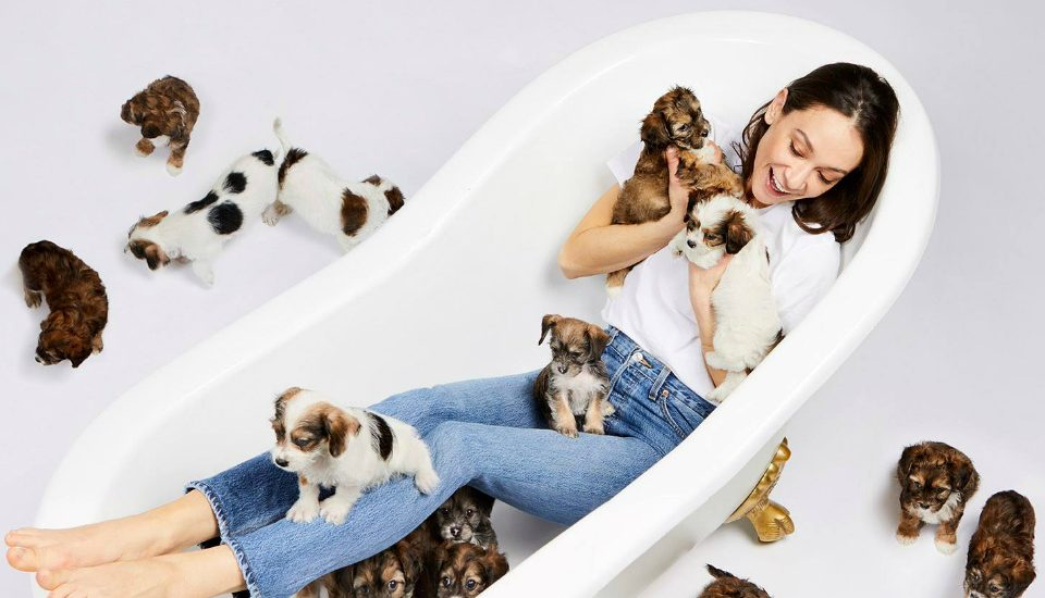 It's Puppy Playtime: Dogville Launches A Puppy Pop-Up For All The Dog Lovers In NYC
