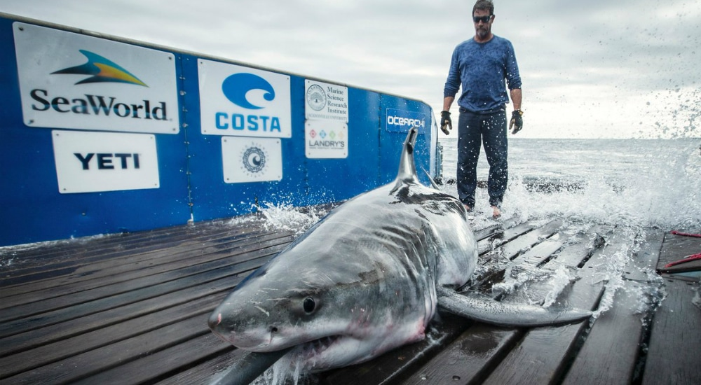 A Great White Shark Has Been Spotted Off The Long Island Coast