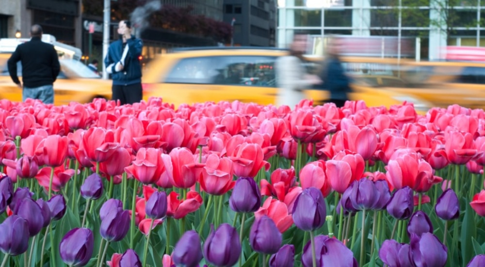 Celebrate Mother's Day In The City With These 4 Original Plans