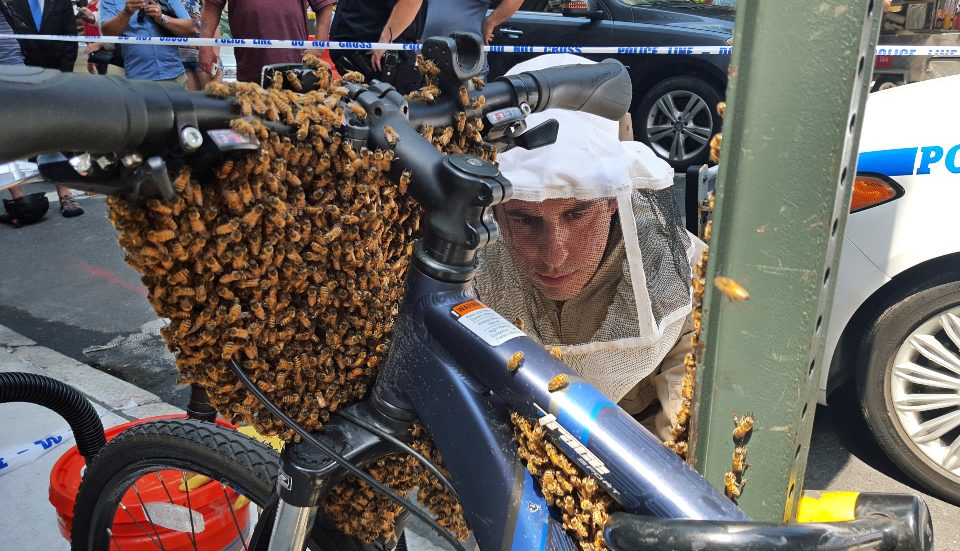 NYPD Bees Come To The Rescue To Safely Remove Swarm Of Bees Around A Bike
